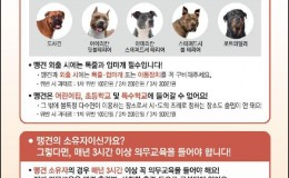 반려동물 포스터1